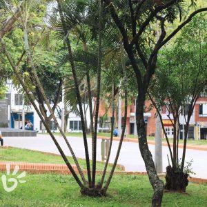 parque-bolivar2