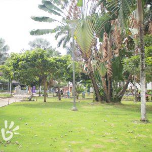 parque-palmas6