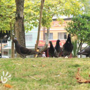 parque-san-francisco5